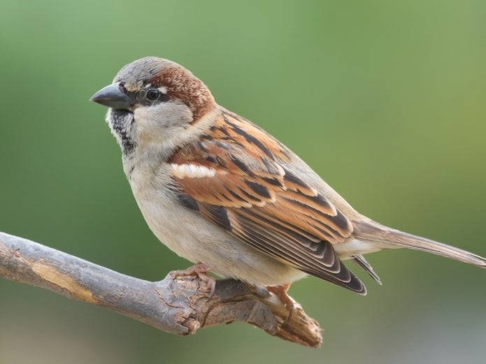 NH Bird